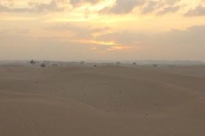 Abu Dhabi Jan 2015-9